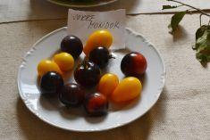 Výstava plodov z polí a záhrad r. 2016