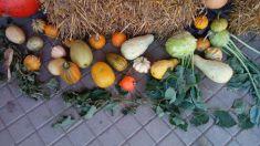 Výstava tekvíc a plodov 2017